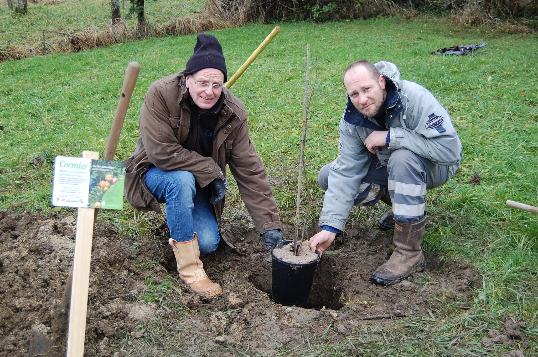 plantation-du-cormier-a-buxieres-sous-les-cotes