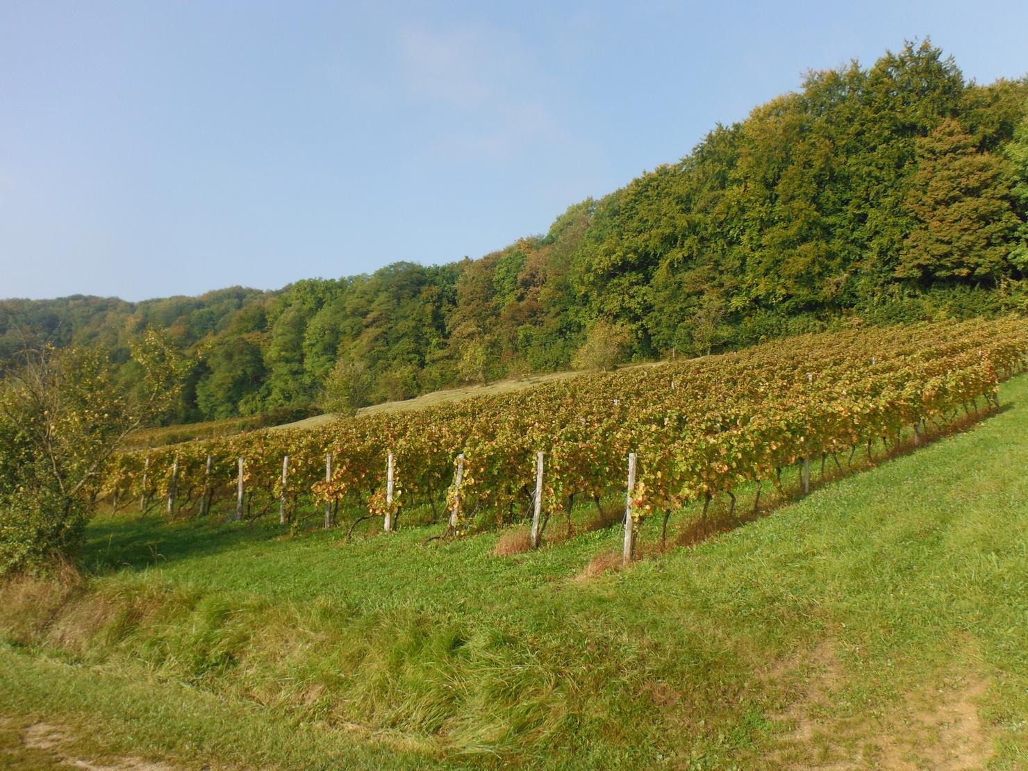 Vigne Buxerulles